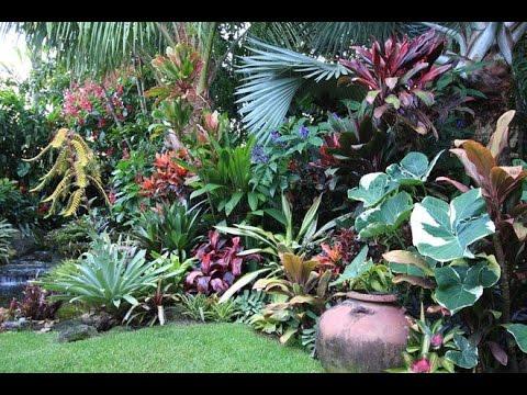 tips in maintaining tropical garden