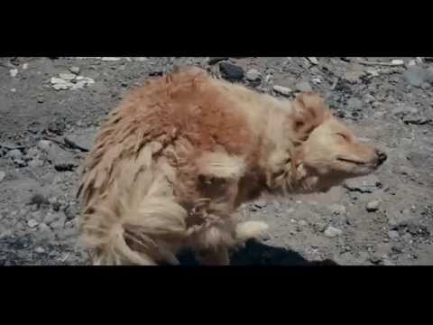 "Documental ""Perros Callejeros"""