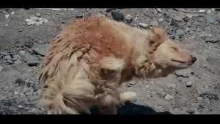 """Gambar cover Documental """"Perros Callejeros"""""""