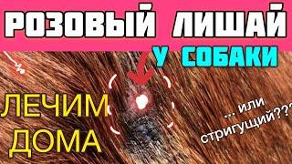 Розовый лишай или стригущий лишай у собаки, кто подскажет? День 6