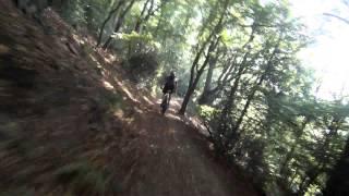 Single-Trail im Sauerland