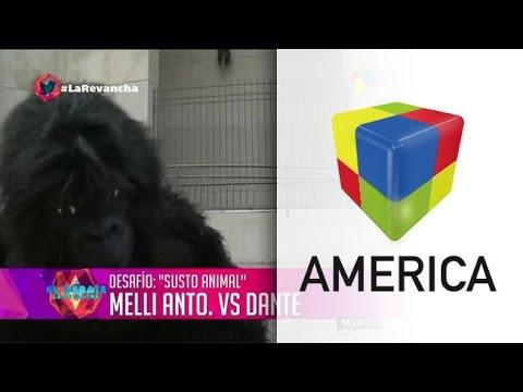 Como un gorila y a los gritos, Dante se lució en un particular desafío