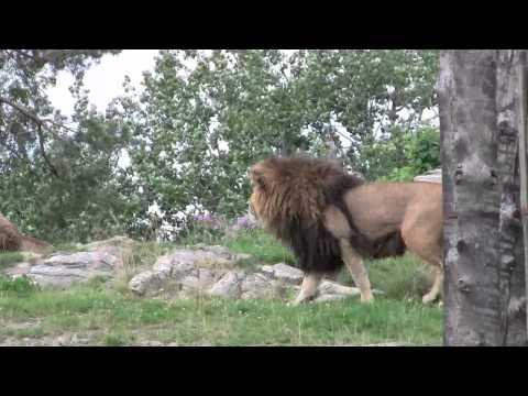 En dag i Kristiansand dyrepark