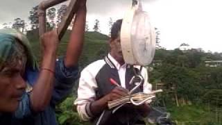 Sri Lanka -Tea Plantation workers