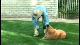 DOG / Как воспитать идеальную собаку. Дон Салливан
