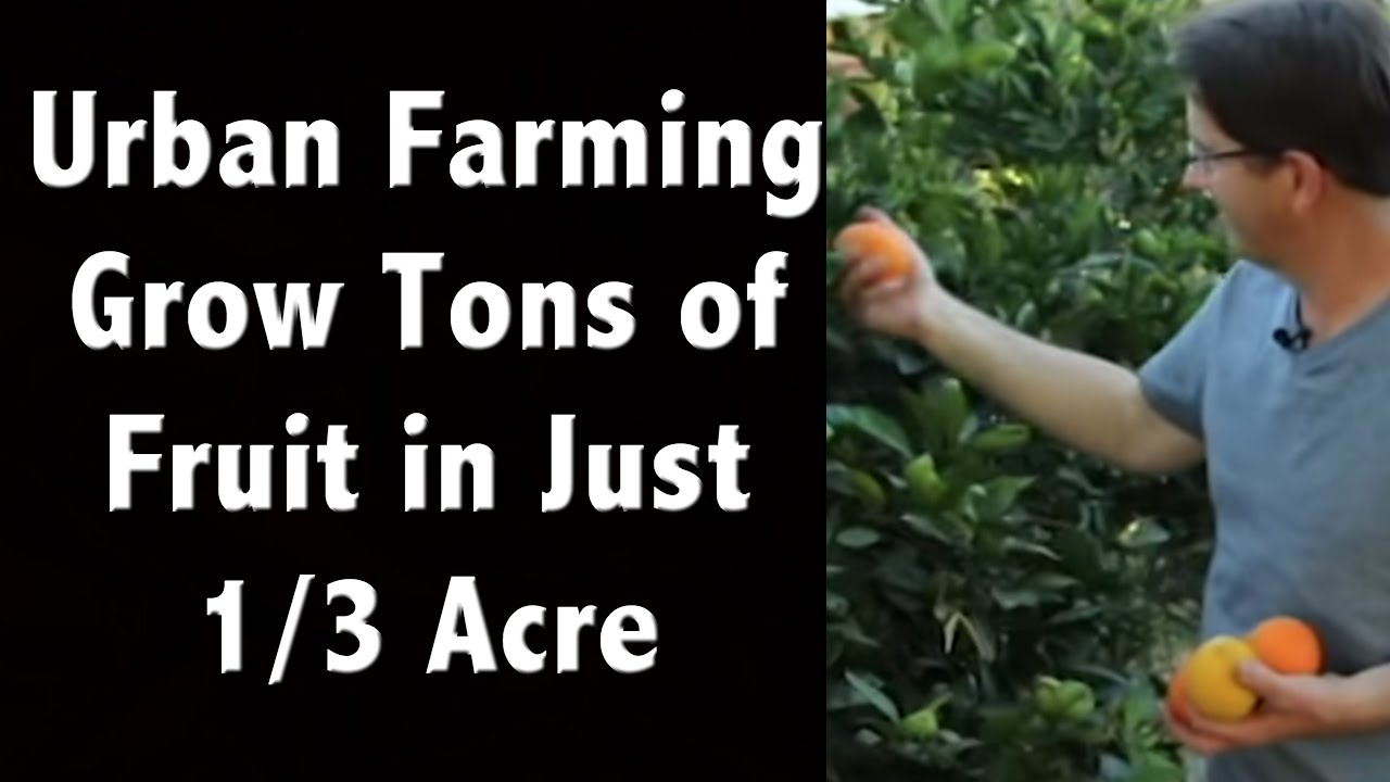 Urban farming ideas amazing tons of fruit trees crammed into just 1 3 acre off grid living - Small farming ideas that pay off ...