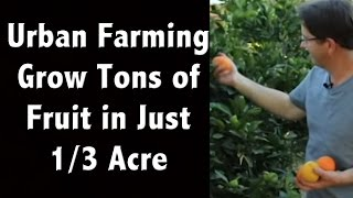 Urban Farming Ideas - Amazing- Tons of Fruit Trees Crammed Into Just 1/3 Acre - Off Grid Living