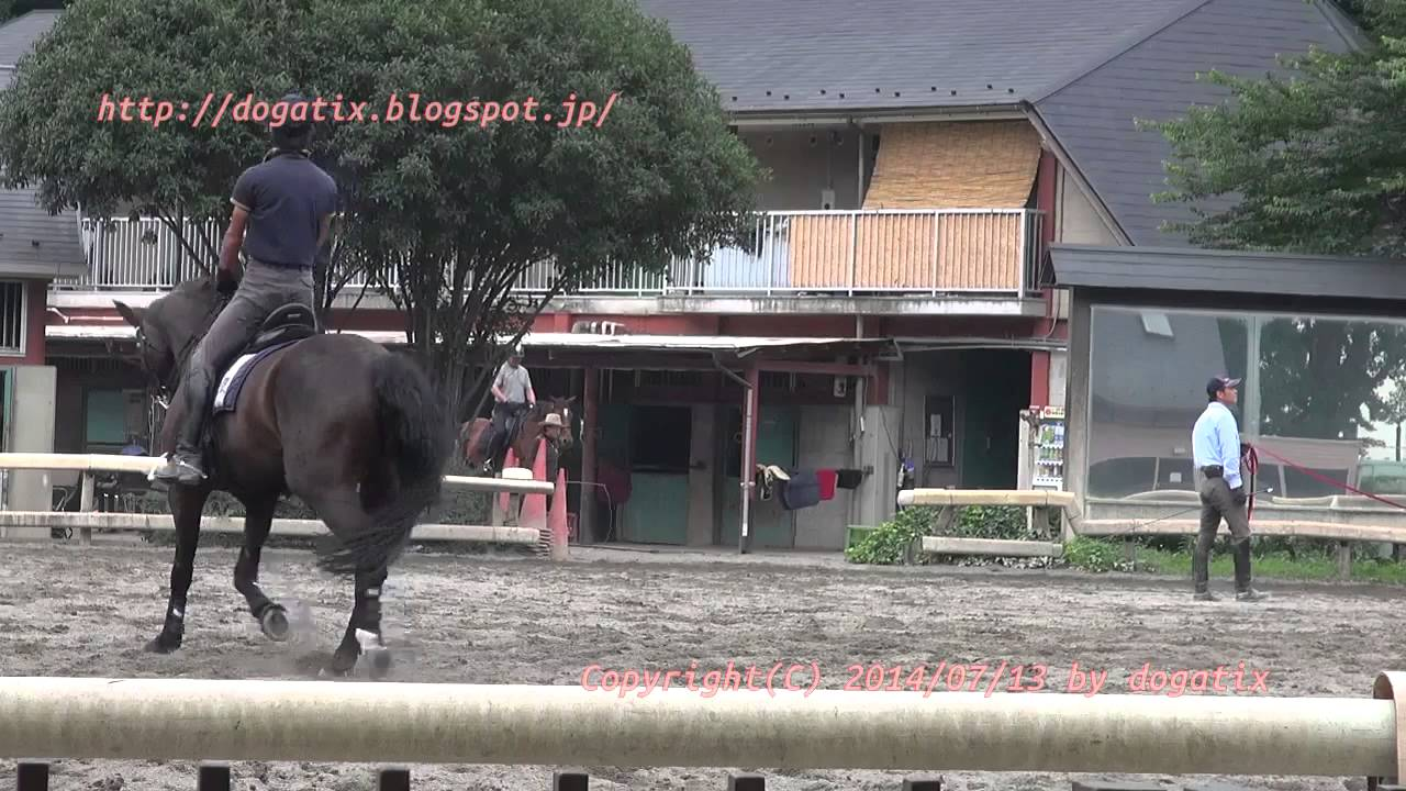 Japan Trip 2014 Tokyo Horse