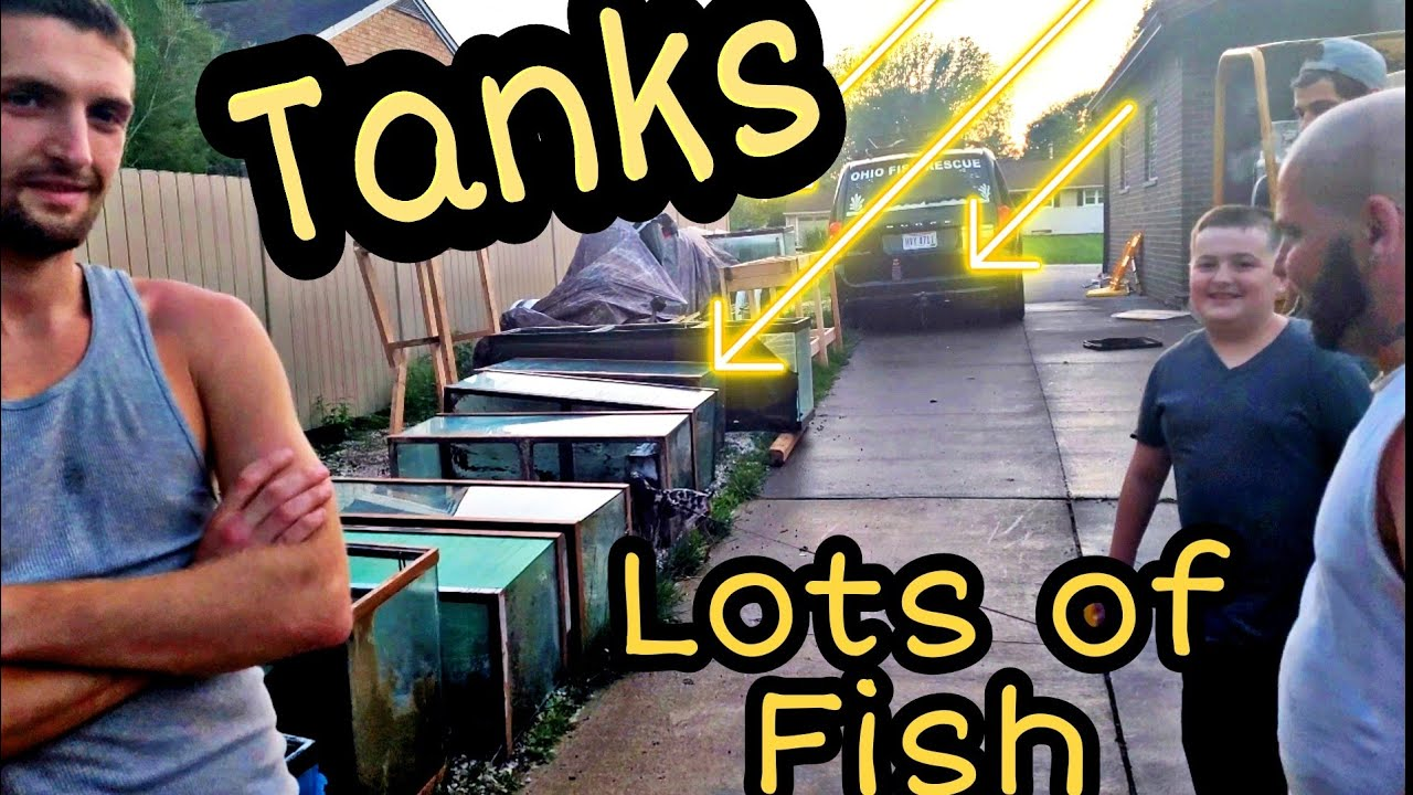 huge rescue - lots of fish - big Umbee- lots of tanks - will have some to give away
