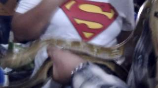 Download Video Ngentot ularr di kramean MP3 3GP MP4