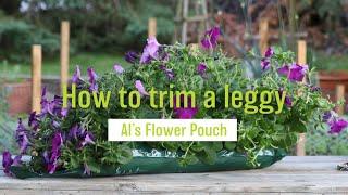How To Trim a Leggy Al's Flower Pouch