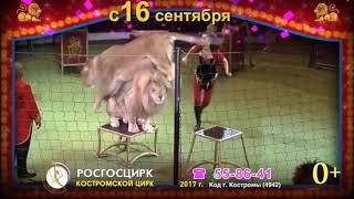 Белые львы Кострома Сентябрь 2017
