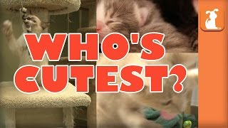 WHO'S CUTEST? YOU DECIDE! Which Kitten is Cutest? (Episode 10)