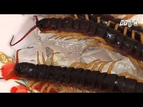 Chế biến món ăn từ côn trùng: Làm sao cho đúng?