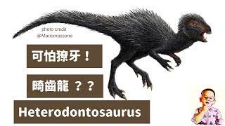 ????兒童恐龍百科 說奇怪不奇怪,一隻恐龍擁有三種不同牙齒的是.... Heterodontosaurus