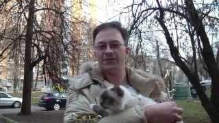 Питомник бирманских кошек Блю Айз