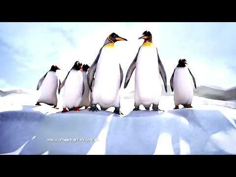 Antarctic Penguins Have Arrived in Melbourne.wmv