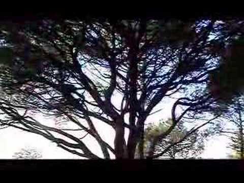 With Trees - Korpiklaani
