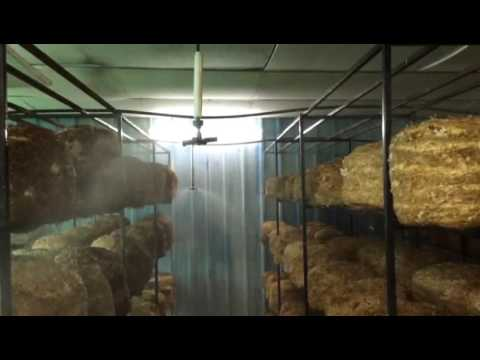 Commercial Mushroom Shed with fogger. You Grow we buy.Gold Medalist. ISO Company. Mahagro INDIA