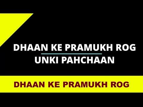 Dhaan Ke Rogo Ki Pahchaan Kaise Karen? धान के रोगो की पहचान कैसे करें?