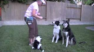 Working With Multiple Dogs On Knowing Their Name - Clicker Training Puppies