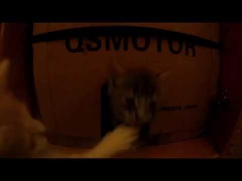 глистогонное дня котят не токсичное