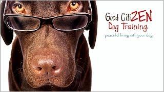 Good Citizen Dog Training Andy Sands - Bradenton And Sarasota