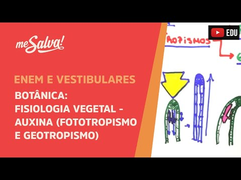 Me Salva! BOT31 - Fisiologia vegetal: Auxina (fototropismo e geotropismo)