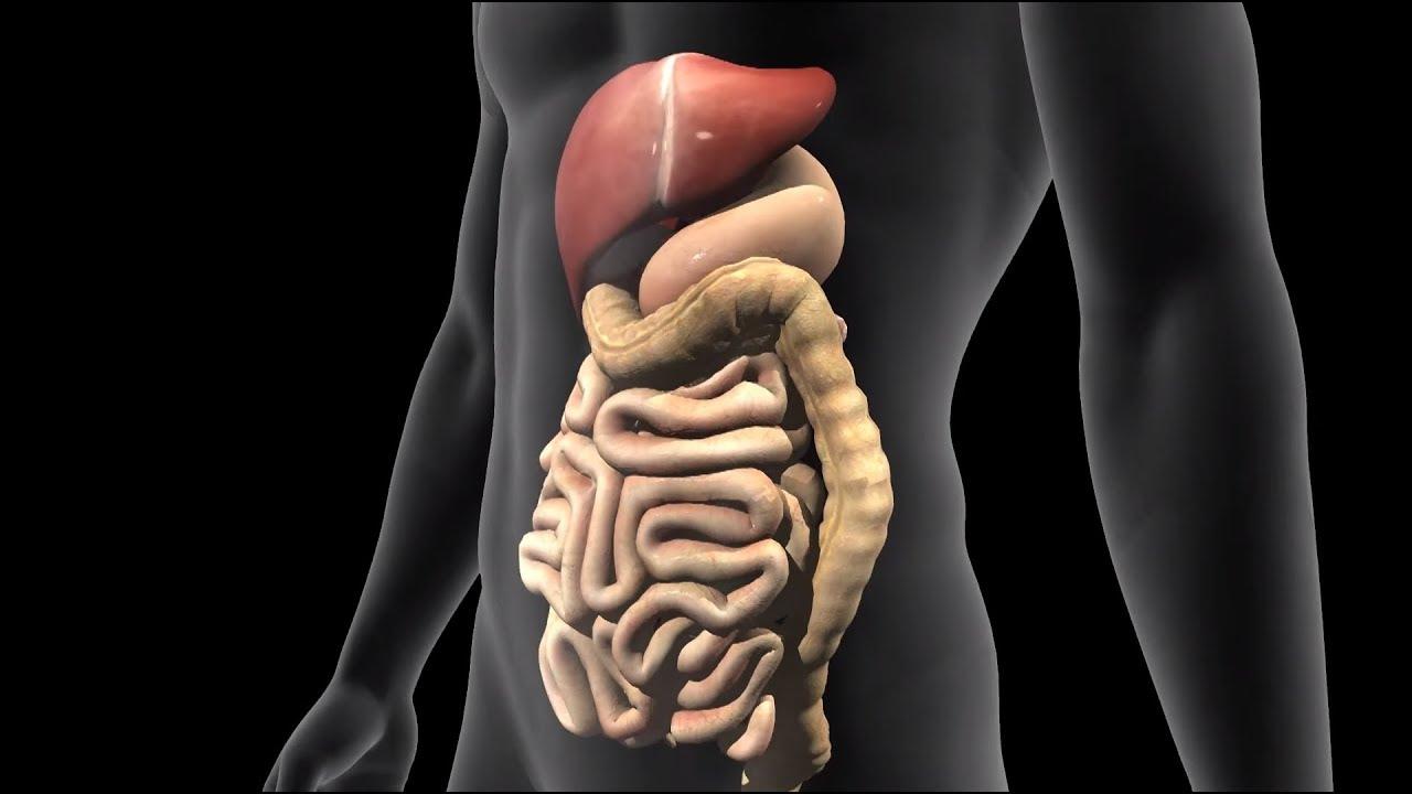 מחלת קרוהן: מאפיינים, גורמים ושכיחות