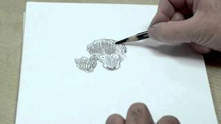 More drawing with Chris Riddell | Waterstones