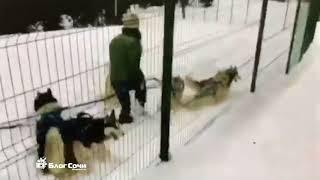 Жестокое обращение с животными в Сочи. ГТЦ Газпром, 04.01.18