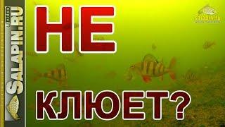 Когда не клюют 130 окуней :) (подводное видео) [salapinru]