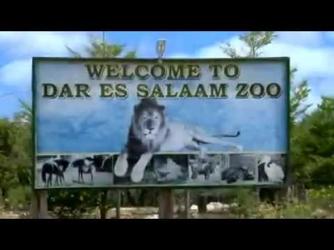 The Best Animal Zoo in Dar es Salaam(A Place You Must Go)
