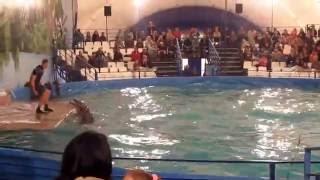 Шоу Дельфинов в Купчино