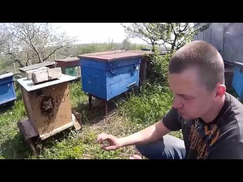 №3 Борьба с пчелами воровками №3 АРЕСТ И УДЕРЖАНИЕ