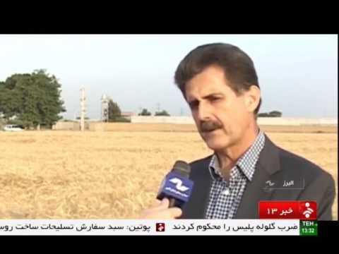 Iran Nazar-Abad county, Mechanized wheat harvest برداشت مكانيزه گندم شهرستان نظرآباد ايران