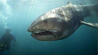5 Extraordinary Sea Creatures