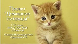 """Проект """"Домашние питомцы"""""""