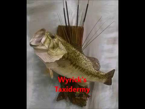 Wyrick's Taxidermy Largemouth Bass Skinning Fish Skin Mount North Carolina Taxidermist