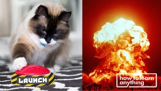 Can I Train a Cat to Launch a Rocket? | How to Learn Anything