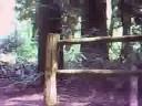 Noble Woods Park; Gravel Trail
