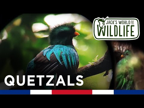 Stunning Tropical Birds in Costa Rica!!  QUETZALS  | Costa Series |