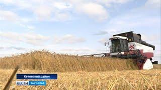 видео Цены на сельскохозяйственные культуры. Данные на 22.10.2018