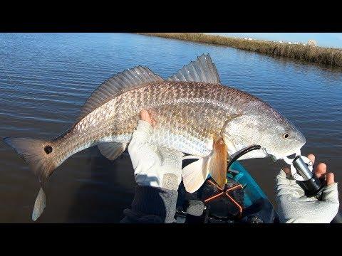 Catching Limits Of Reds During Winter, Kayak Fishing Texas Marsh