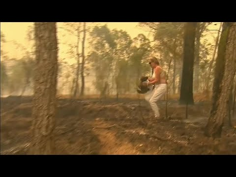 Seaman Sam's Daily Dose of Cute - Shocking footage shows woman braving brushfire to save injured koala