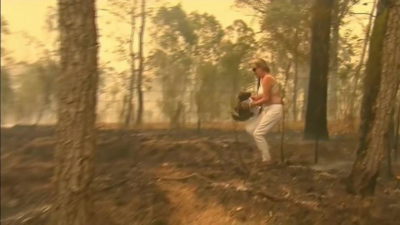 Храбра жена спасува коала од шумски пожар
