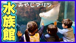 【宮島水族館Vlog】間近でサメとエイが!怖いけどペンギン触ったよ♡おでかけ 旅行【かえるのコはカエルCHさん】