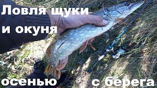 Ловля щуки и окуня осенью на малой реке рыбалка на щуку на малой реке