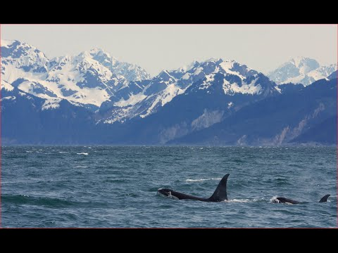 Visiting Kenai Fjords National Park, National Park in Alaska, United States