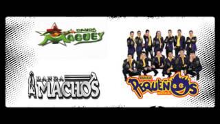 Banda Pequeños Musical - Banda Maguey  / Banda Machos - Las Reinas De Los 90´s
